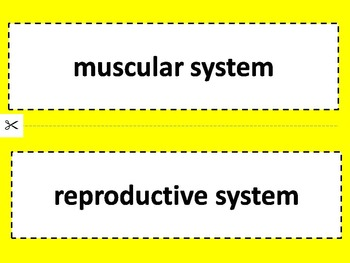 Human Body Vocabulary (word wall / quiz / power point / webquest)