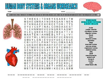 Human Body Wordsearch