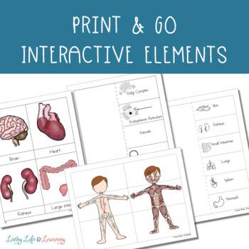 Human Body Systems Workbook