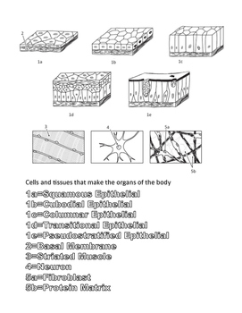 Human Body, the Coloring Book-Organization from cells to body