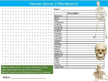 Human Bones #2 Wordsearch Puzzle Sheet Activity Keywords Biology Anatomy