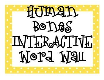 Human Bones INTERACTIVE Word Wall