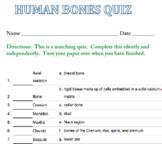 Human Bones Matching Quiz