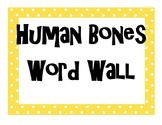 Human Bones (Skeletal System) Word Wall High School Anatomy