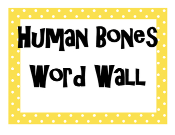 Human Bones (Skeletal System) Word Wall High School Anatomy