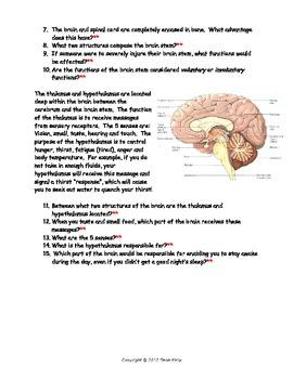Human Brain - Bundled Unit in Word