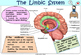 Human Brain Colorful Posters for Classroom