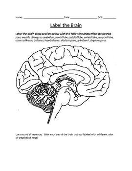Human Brain Coloring and Labeling