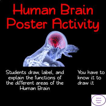 Human Brain Poster Activity