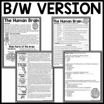 Human Brain Reading Comprehension Worksheet, Science, Body, Nervous System