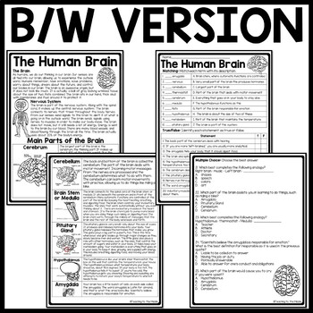 Human Brain Reading Comprehension Worksheet, Science, Body, Nervous System