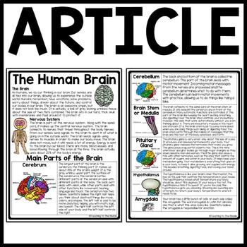 Human Brain Reading Comprehension Worksheet Nervous System ...