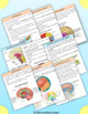 Human Brain : Structure & Functions - Unit with Worksheets