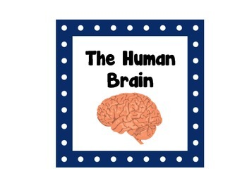 Human Brain Word Wall