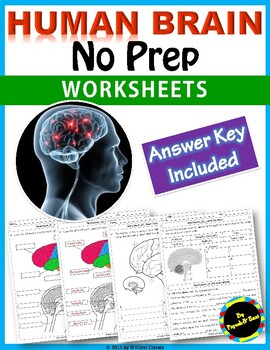 Human Brain : labeling diagram, identify parts and their functions  Worksheets