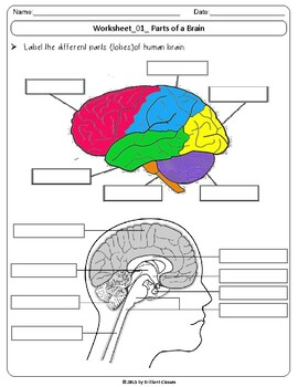 Human Brain : Labeling diagrams/Parts & Functions/Fill in ...