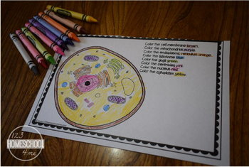 Human Cell Mini Book, Cell Worksheets & Cell Review Game