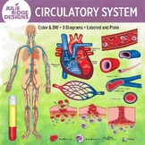 Human Circulatory System Clip Art Illustrations