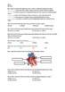 Human Circulatory System - Worksheet