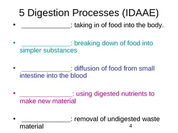 Human Digestion (student's version)