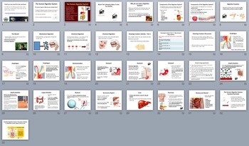 Digestive System Mini Unit - Biology PowerPoint Lesson, Notes and Activities