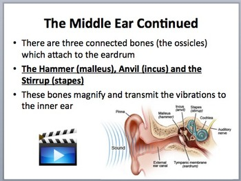 Human Ear Anatomy and Hearing - Biology and Physics Lesson Package