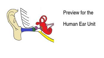 Human Ear Unit