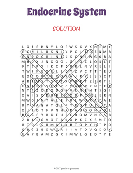 Human Endocrine System Word Search Puzzle