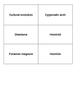 Human Evolution Bell Ringer