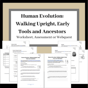 Human Evolution: Walking Upright, Early Tools and Ancestors Worksheet