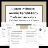 Human Evolution: Walking Upright, Early Tools and Ancestor
