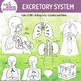 Human Excretory System Clip Art Illustrations