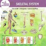 Human Skeletal System Clip Art Illustrations