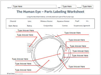 Human Eye & Ear Diagram Labeling Science Worksheet for Google SlidesTeachers Pay Teachers