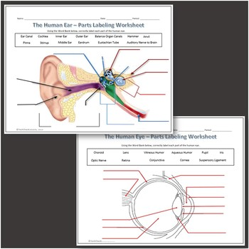 human eye & ear diagram labeling worksheet - science by techcheck lessons