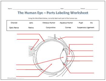 Human Eye & Ear Diagram Labeling Worksheet - Science