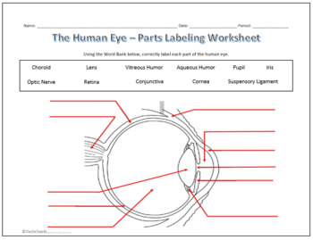 Human Eye & Ear Diagram Labeling Worksheet - Science by TechCheck LessonsTeachers Pay Teachers
