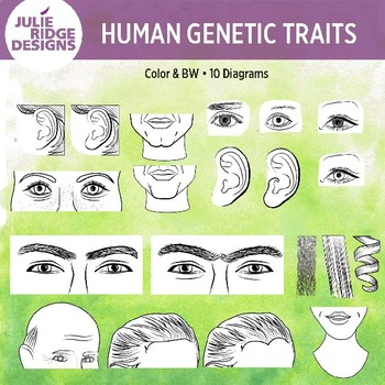 Human Genetic Traits — 20 Clip Art Illustrations #OctTpTClipLove..