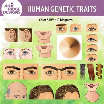 human genetic traits 20 clip art illustrations by julie ridge designs