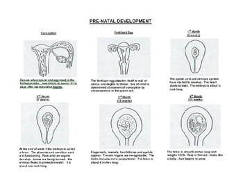 Human Growth and Development: Human Reproduction PowerPoint Presentation