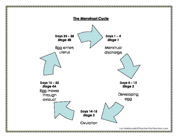 Menstrual cycle teaching resources teachers pay teachers human growth and development the menstrual cycle graphic organizer ibookread Read Online
