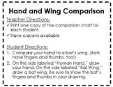 Bat Unit Materials: Human Hand and Bat Wing Comparison Chart