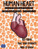Human Heart Crossword