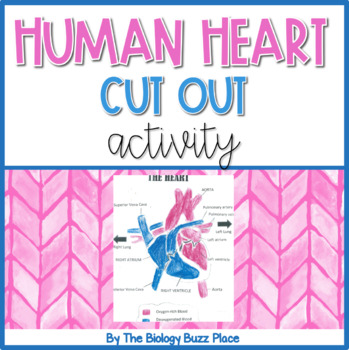 Human heart cut out activity pdf by the biology buzz place tpt human heart cut out activity pdf ccuart Image collections