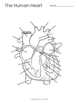 Human Heart Diagram Coloring Page