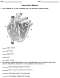 Human Heart Diagram Worksheet