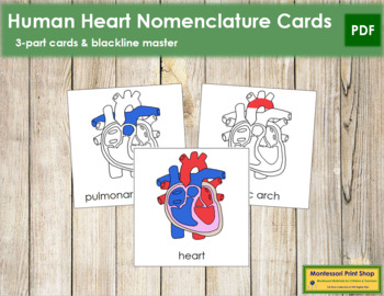 Human Heart Nomenclature Cards