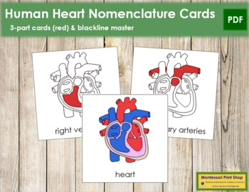 Human Heart Nomenclature Cards (Red)