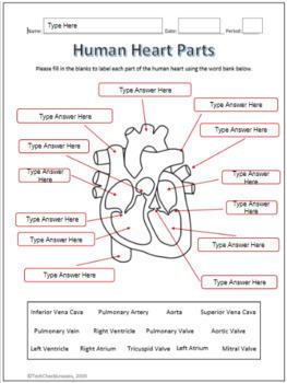 35 Label Arteries And Veins Worksheet - Labels Database 2020