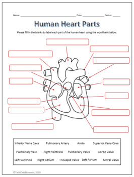 Human Heart Parts and Blood Flow Labeling Worksheets - Diagram/Graphic  Organizer
